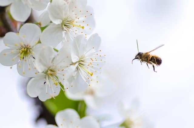 A bee pollenating flowers