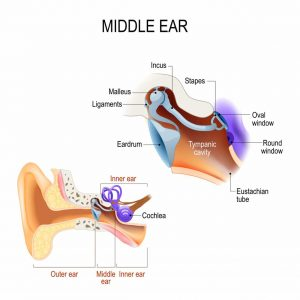 diagram of the middle ear